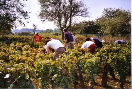 Les Vendanges 2005 à Comblanchien